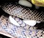 水律蛇养殖视频